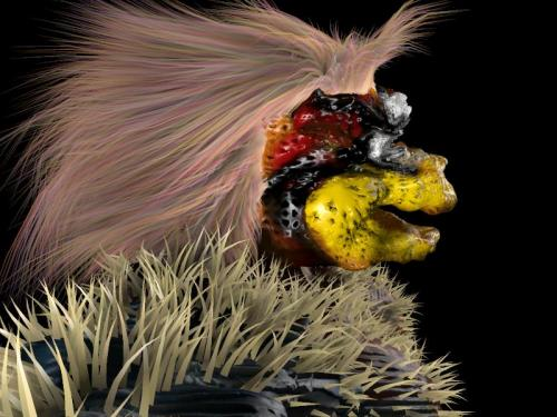 images-3d-laola phasebirdtest2